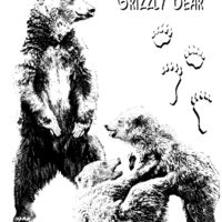 Z28 Grizzly Bear Thumbnail