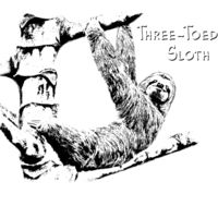 Z527 Three Toed Sloth Thumbnail