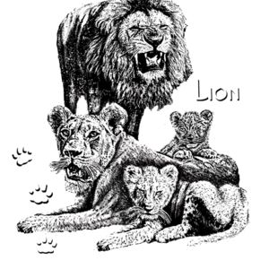 Z23 African lion family Thumbnail