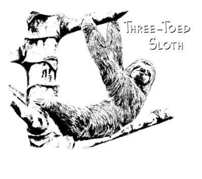 Z527 Three Toed Sloth