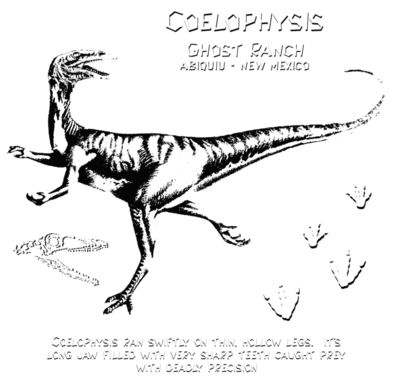 D16 coelophysis ghost ranch