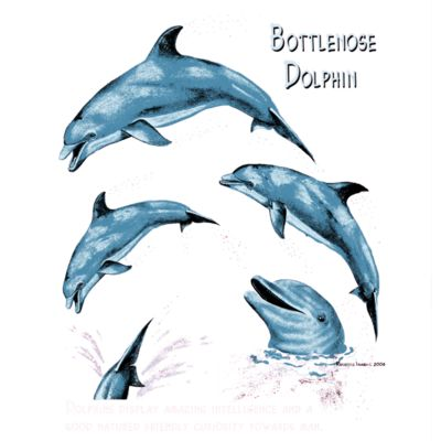 S51 Bottle Nose Dolphins